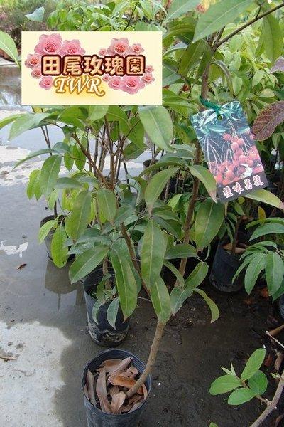 壁纸 花 盆景 盆栽 植物 桌面 400_600 竖版 竖屏 手机